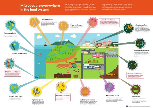 Infographic: Microbes are everywhere in the food system!